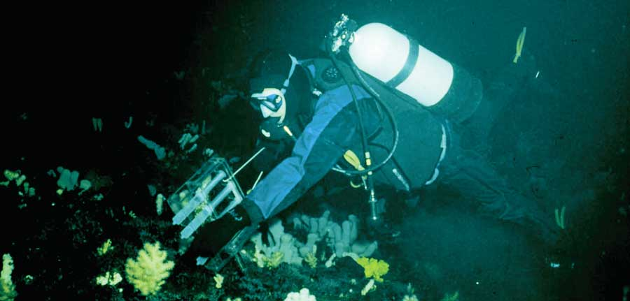 Dr. Marc Slattery dives in search of undersea samples.